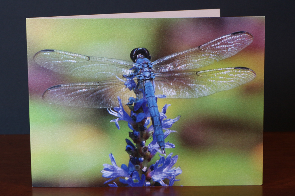 Front of Dragonfly Note Card
