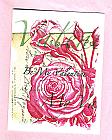 Rose GF_037V