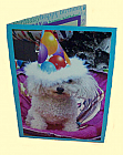 Miniature Toy Poodle Birthday