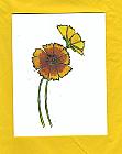 Coreopsis GF_057