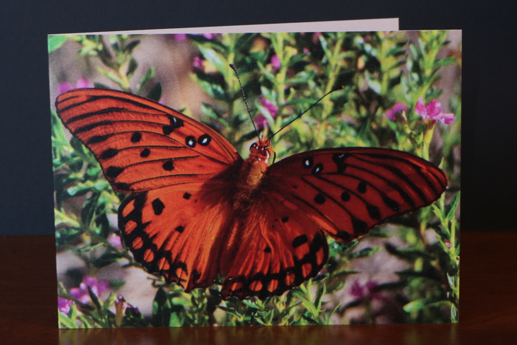 Front of Monarch Butterfly Note Card