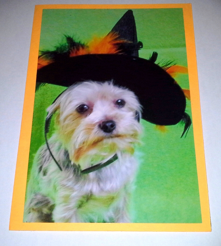 Dog in Witches Hat