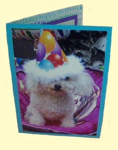Miniature Toy Poodle Birthday