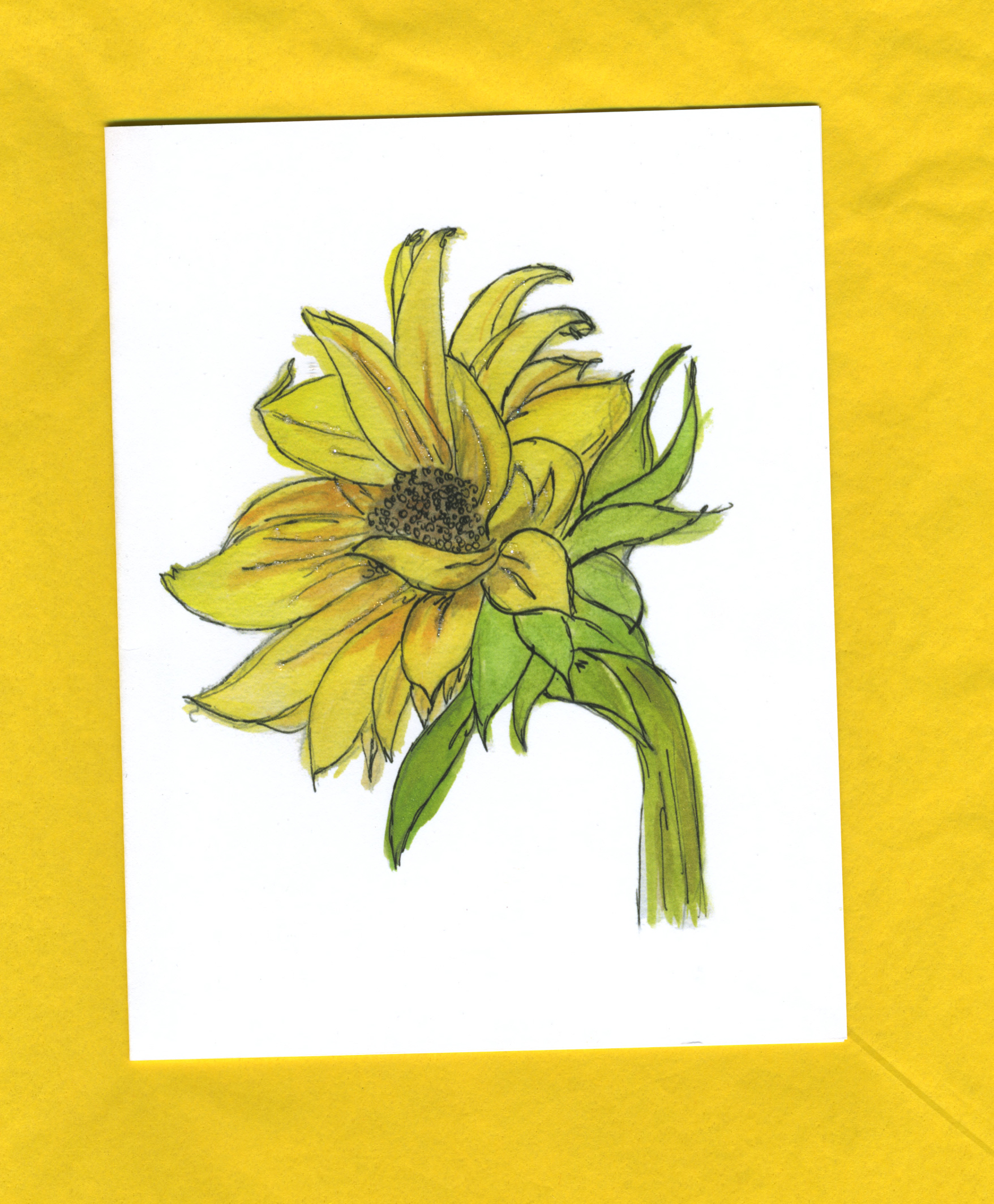 Sunflower GF_053