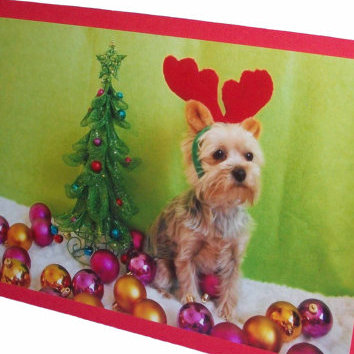 Yorkshire Terrier Christmas