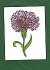 Carnation GF_051