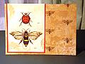 Everyday Ladybug