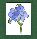 Viola GF_052